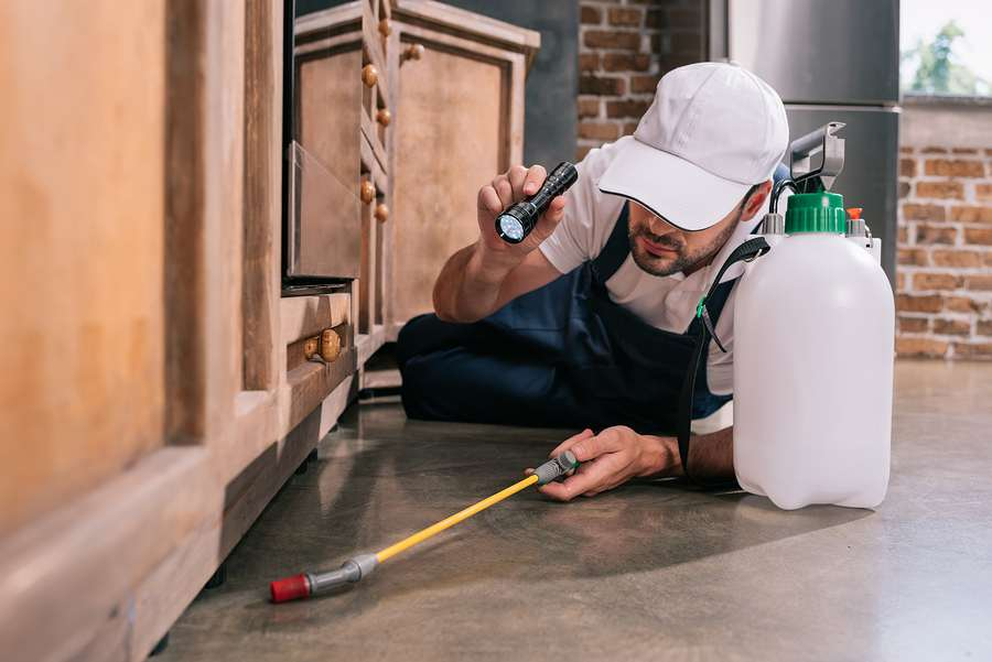 Professional pest control in Melbourne specialist inspecting a home